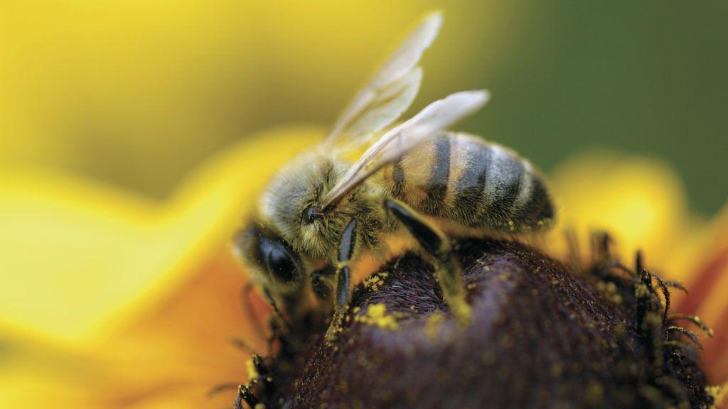 Csíkos ruhás barátaink, a méhek - Lopes-Szabó Zsuzsa
