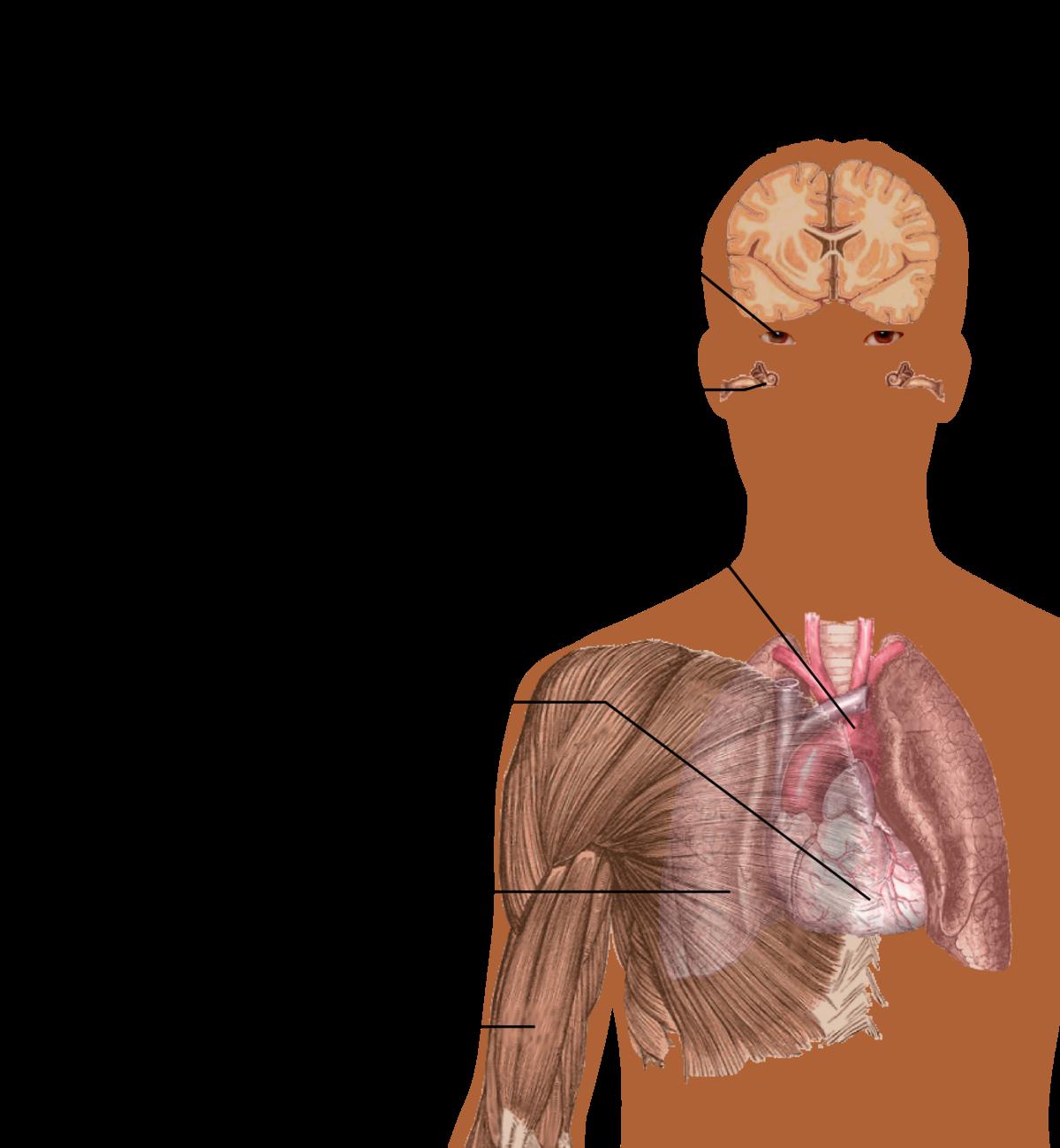 Gyógyszerek enterobiosis ian során